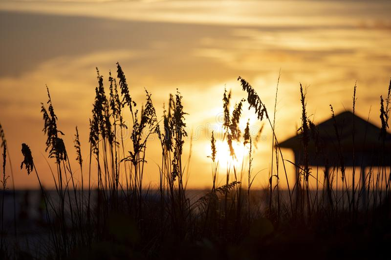 Sunset at St.Pete`s beach. Blurry sunset at St.Pete`s beach with silhouette of beach grass and lifeguard kiosk royalty free stock image