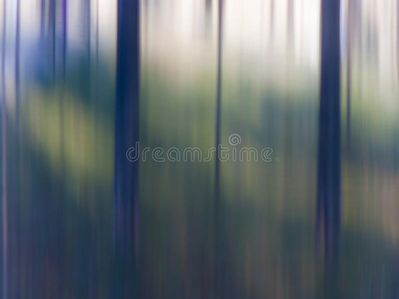 Blurry trees in woods stock photo