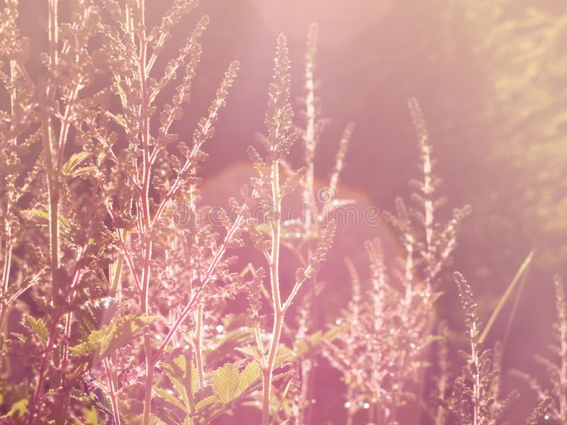Blurry vintage meadow, grass in soft sunlight, toned image, stock photos