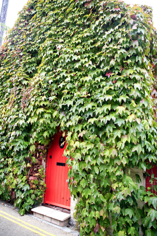 Bluszcz chałupa, Christchurch, Dorset zdjęcie stock