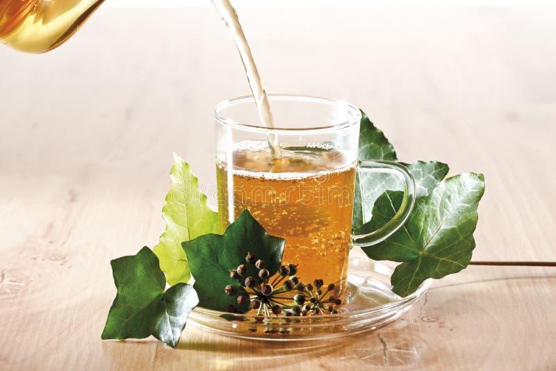 Bluszcz herbata (Hedera helix) obraz stock