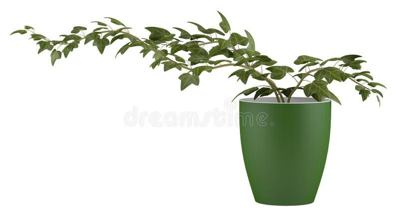 Bluszcz w flowerpot ilustracja wektor