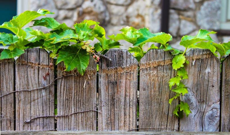 Bluszcza dorośnięcie wzdłuż wierzchołka przetarty drewniany ogrodzenie z zamazaną kamienną ścianą w tle zdjęcie royalty free