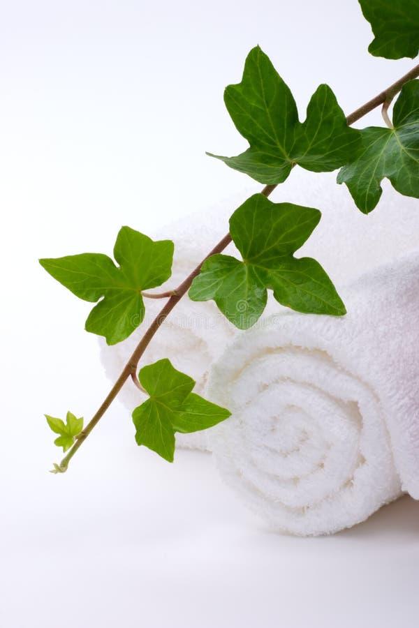 bluszczy ręczniki zdjęcie royalty free