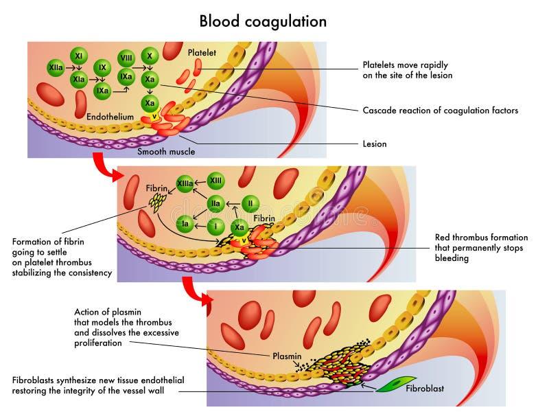 Blutgerinnung lizenzfreie abbildung