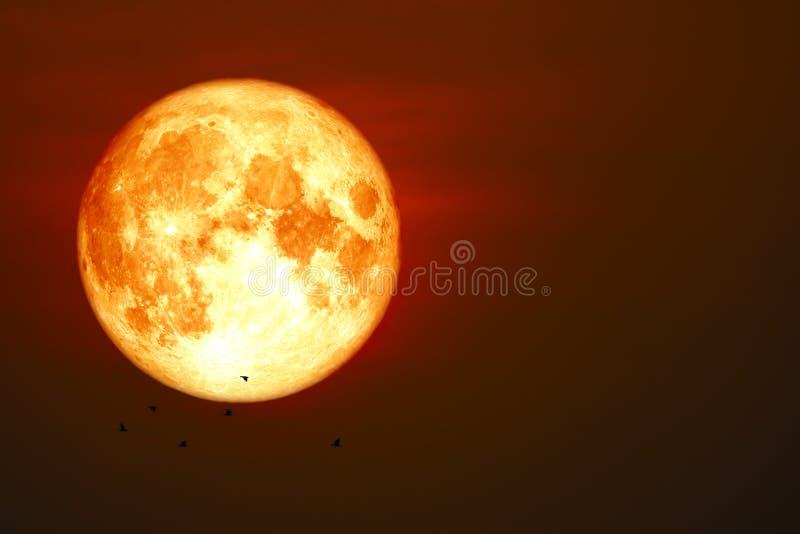 Blutmond- und -sonnenunterganghimmelmondscheinschattenbild-Fliegenvögel lizenzfreie stockfotografie