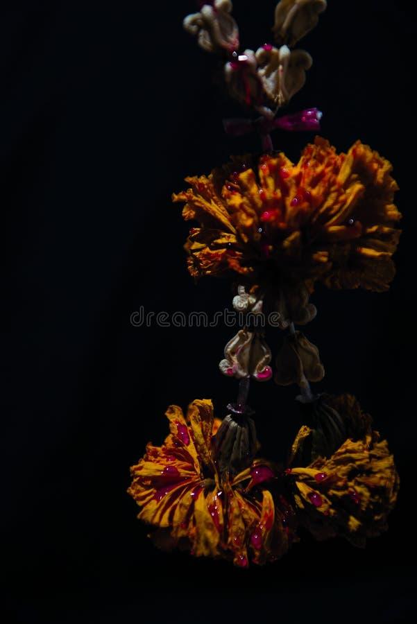 Blutung mit der Trockenblumegirlande stockfoto