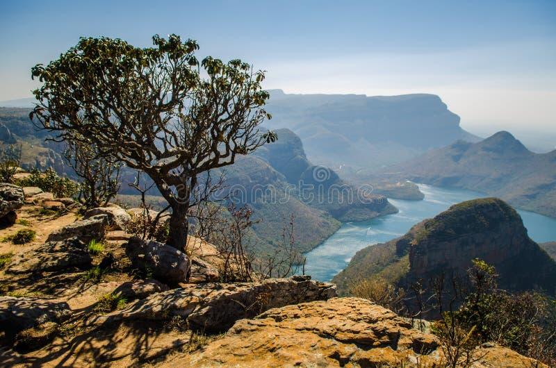 Blyde flodkanjon; Mpumalanga nära Graskop africa near berömda kanonkopberg den pittoreska södra fjädervingården fotografering för bildbyråer