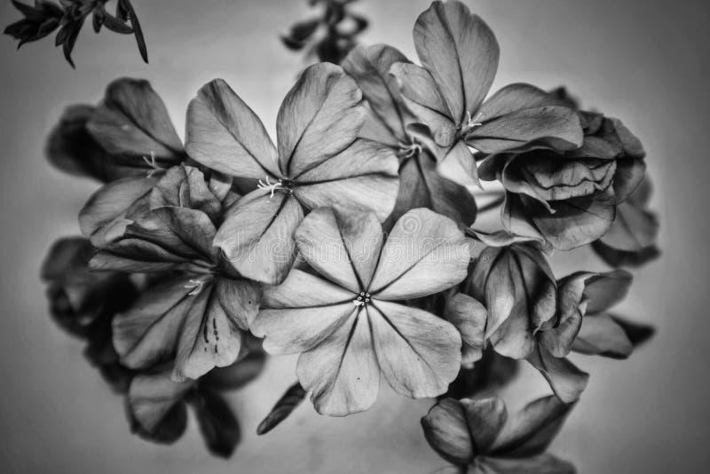 blyertsblommakonst fotografering för bildbyråer