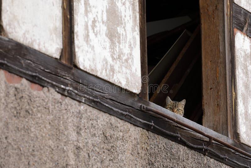Blyg katt i gammal ladugård royaltyfri bild