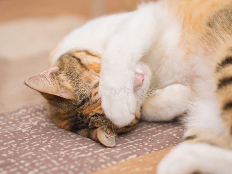 Blyg katt på säng royaltyfri bild