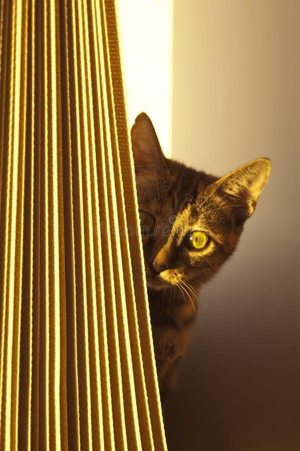blyg kattunge arkivbilder