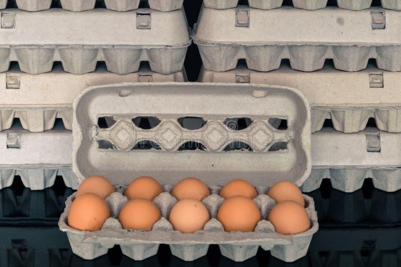 Boîte à oeufs avec dix oeufs organiques de poulet à l'intérieur photos libres de droits