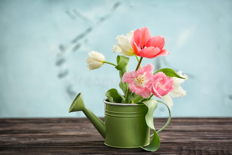 Boîte d'arrosage avec de belles tulipes sur la table sur le fond léger images stock