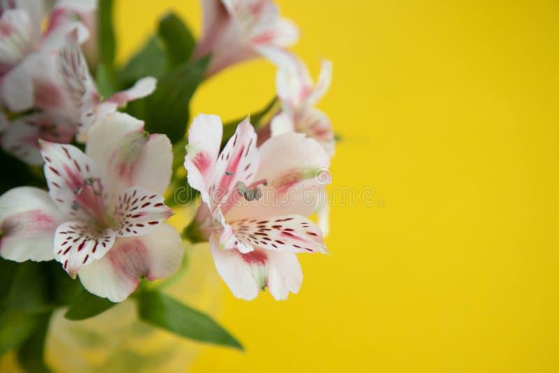 Boîte d'arrosage rose vide et trois fleurs cramoisies de gerbera se trouvant diagonalement Trois fleurs rouges et une boîte d'arr image libre de droits