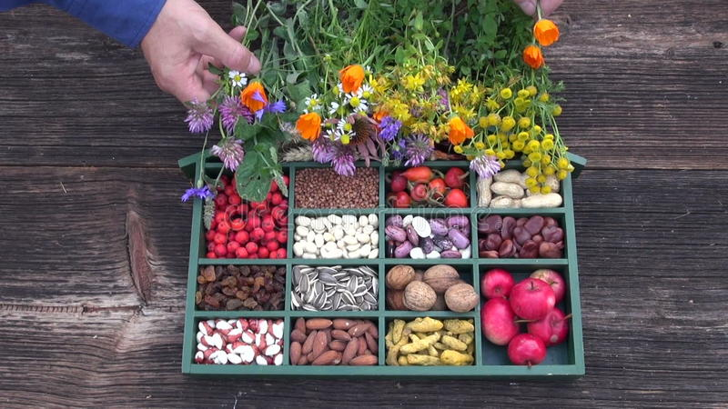 boîte d'ingrédient de nourriture et fleurs médicales d'herbes banque de vidéos