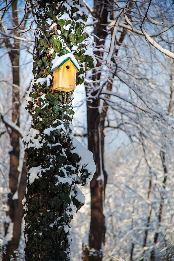 Boîte d'oiseau sur l'arbre avec le lierre dans la neige photographie stock libre de droits