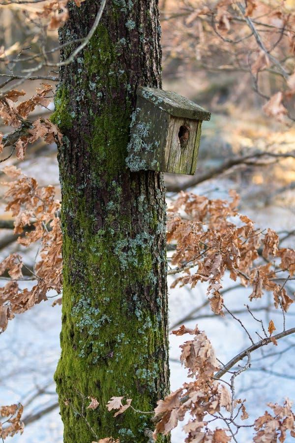 Boîte d'oiseau très vieille d'emboîtement couverte dans le lichen et la mousse, accrochant sur un arbre au printemps images libres de droits
