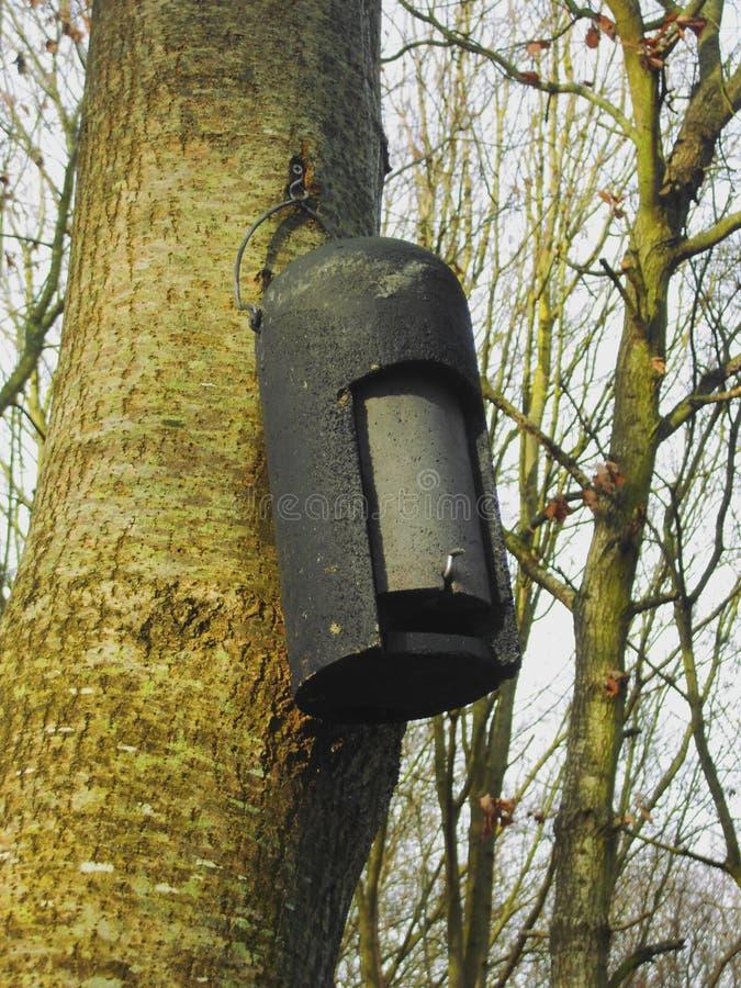 Boîte de batte accrochant sur l'arbre image stock