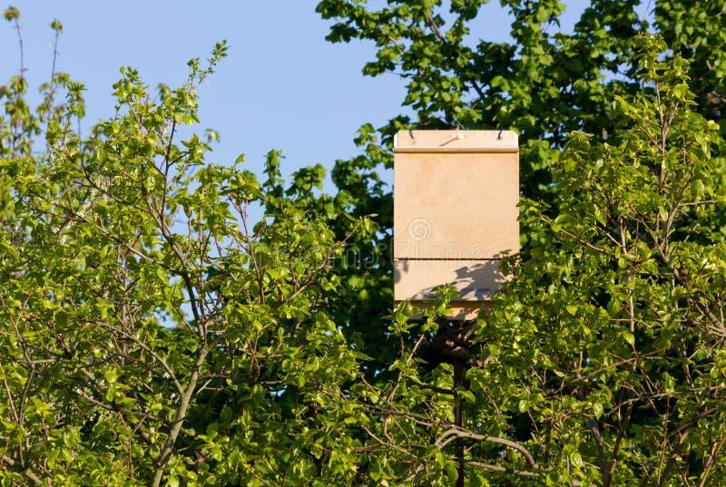 Boîte de batte parmi des branches d'arbre images stock