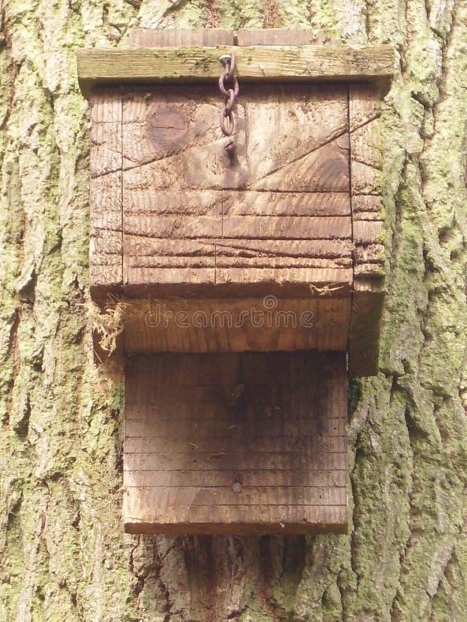 Boîte de batte sur l'arbre image libre de droits