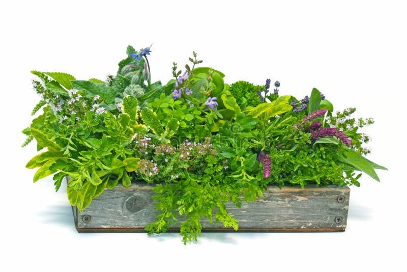 Boîte de fleur complètement d'herbes photo libre de droits