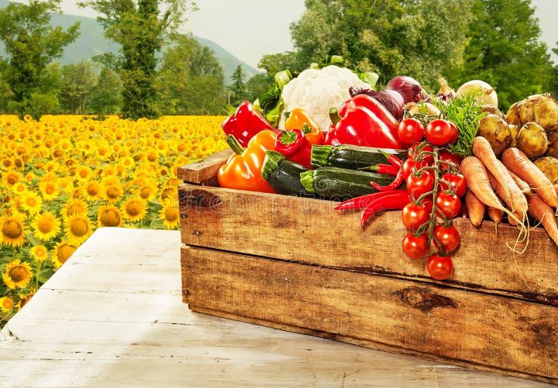 Boîte en bois remplie de légumes frais de ferme images libres de droits