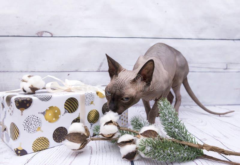 Boîte en papier d'emballage blanc avec les boules peintes de Noël, Sn de chat photo libre de droits