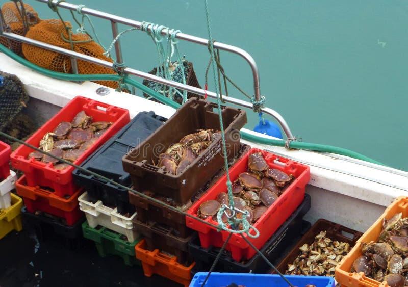 Boîtes complètement de crabes sur un bateau photos stock