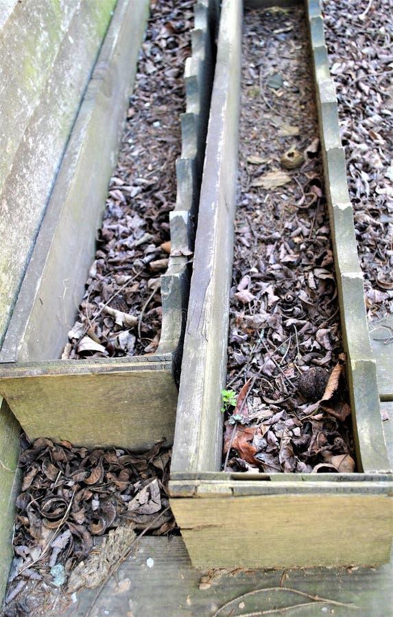 Boîtes en bois d'usine images stock