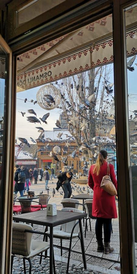 Bośnia Sarajevo gołębie cukierniani zdjęcie royalty free