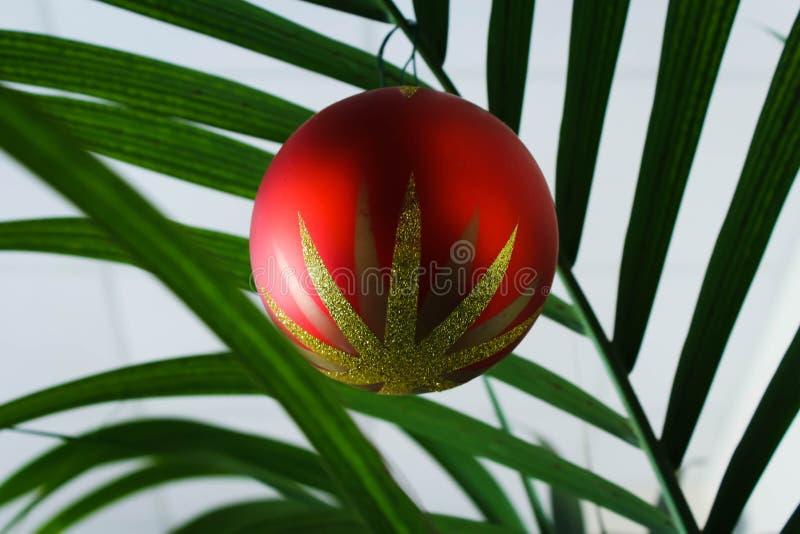 Boże Narodzenia balowi na drzewku palmowym fotografia royalty free