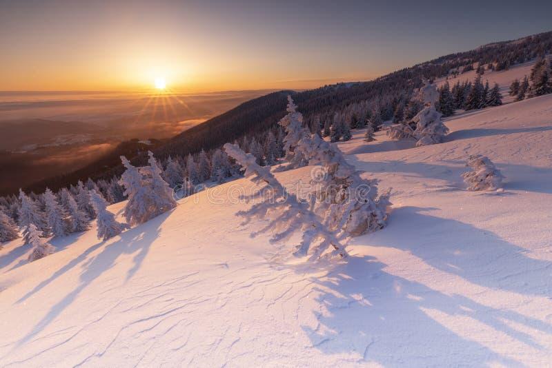 Boże Narodzenia i nowego roku tło z zim drzewami zakrywającymi z świeżym śniegiem w górach z kolorowym niebem - Magiczny wakacje  obraz stock