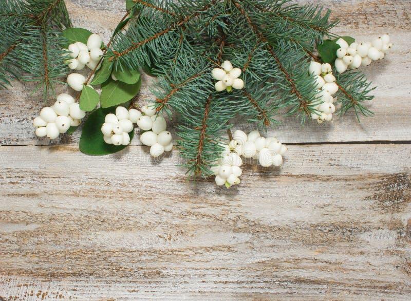 Boże Narodzenia lub nowego roku tło: drzewo gałąź zdjęcia stock