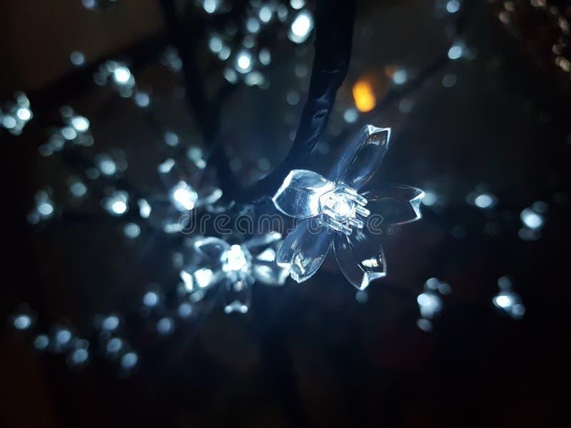 Boże Narodzenia makro- obraz royalty free
