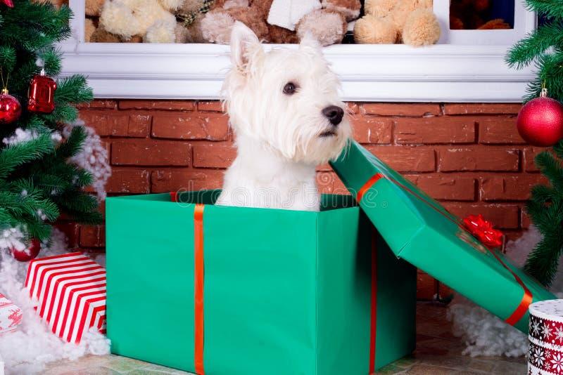 Boże Narodzenia Są prześladowanym jako symbol nowy rok zdjęcie stock