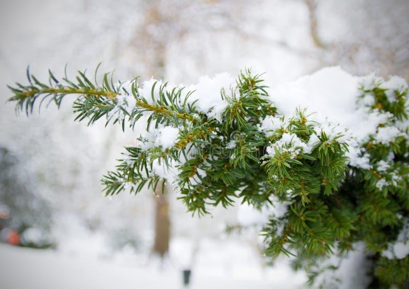 boże narodzenia snow drzewo fotografia stock