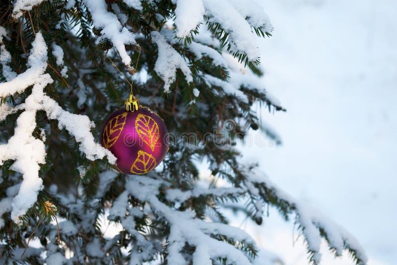 boże narodzenia zakrywali dekoraci śniegu świerczynę fotografia royalty free