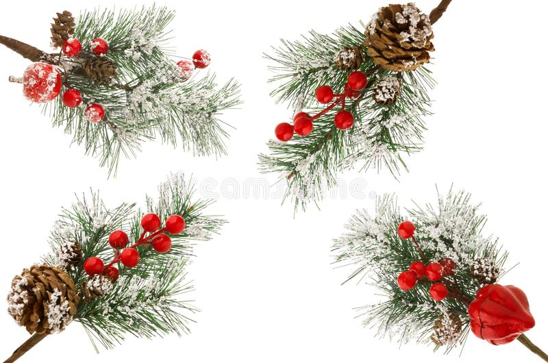 Boże Narodzenia zielenieją świerczyny gałąź z śniegiem, rożkami i czerwieni jagodami odizolowywać na białym tle, fotografia stock