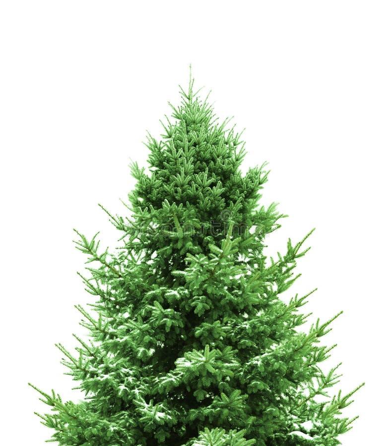 boże narodzenia zielenieją drzewa fotografia stock