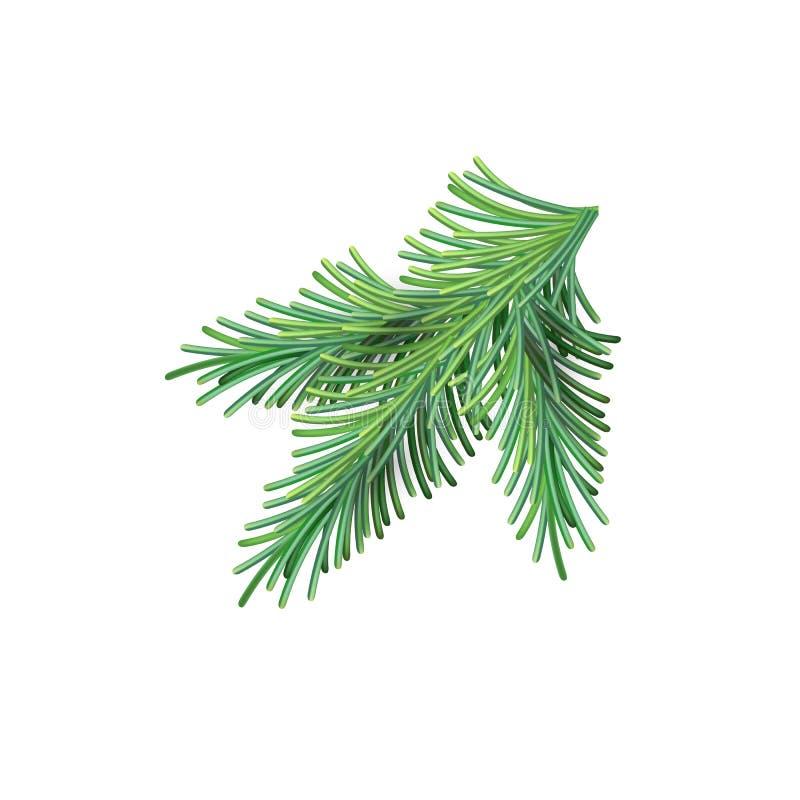 Boże Narodzenia zielenieją luksusową świerczyny gałąź Jedlina nowego roku siatki gałąź Wektorowy ilustracyjny element odizolowywa royalty ilustracja