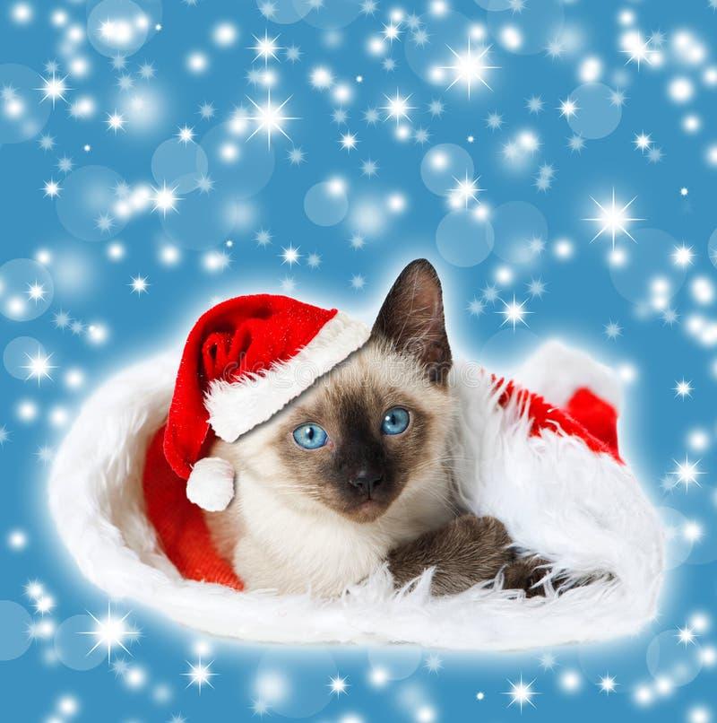 Boże Narodzenie figlarka zdjęcie royalty free