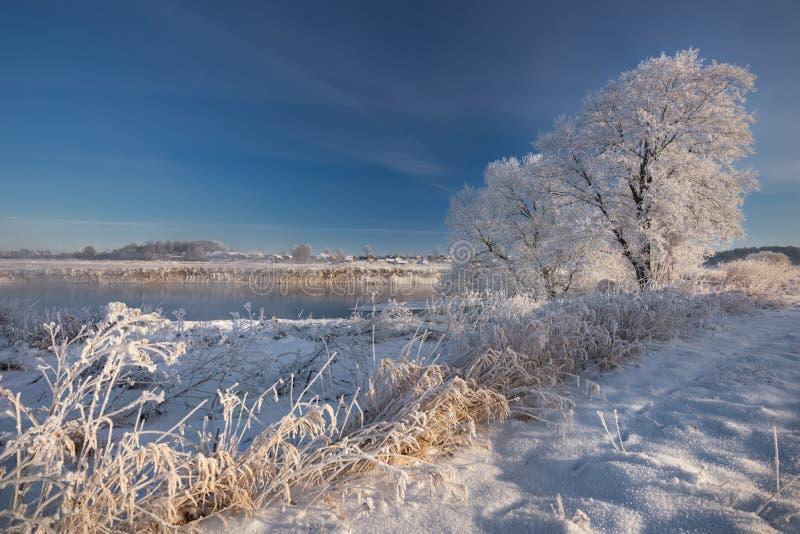 Boże Narodzenie koronka Przeważna spokojna zimy rzeka, otaczająca drzewami zakrywającymi z hoarfrost i śniegiem który spada na pi fotografia stock