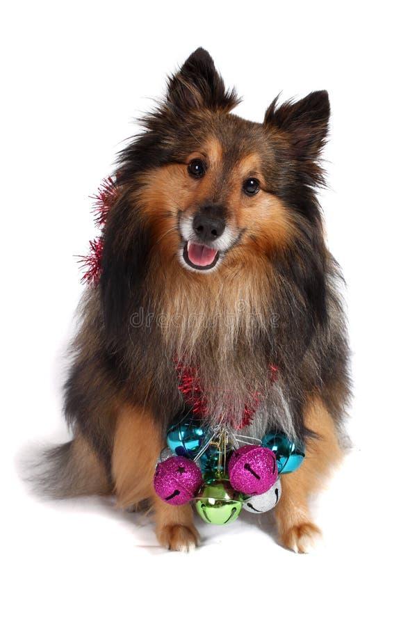 boże narodzenie pies fotografia stock