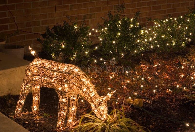 boże narodzenie plenerowego jeleń światła zdjęcie stock