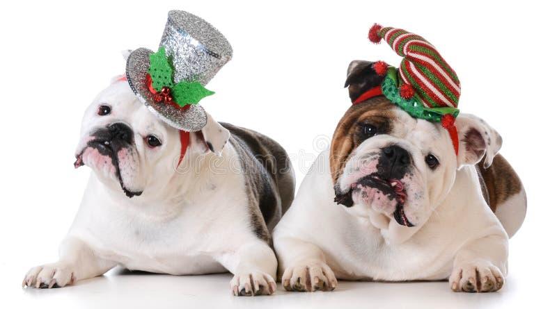 Boże Narodzenie psy obraz stock