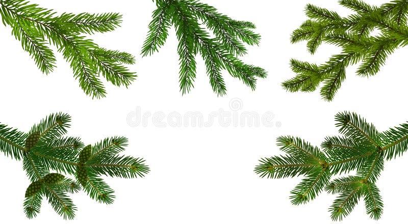 boże narodzenie w nowym roku Ustawia od pięć zielonej realistycznej gałąź jedlinowy lub sosnowy zakończenie Rozgałęziający się ou royalty ilustracja