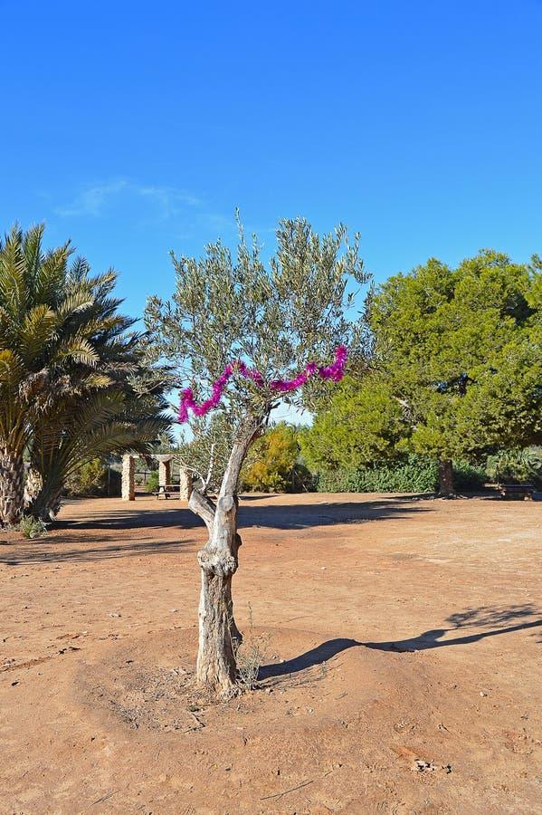 Bożenarodzeniowa dekoracja W drzewie oliwnym obraz royalty free