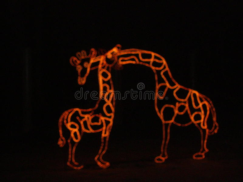 Bożenarodzeniowa noc przy zoo fotografia royalty free