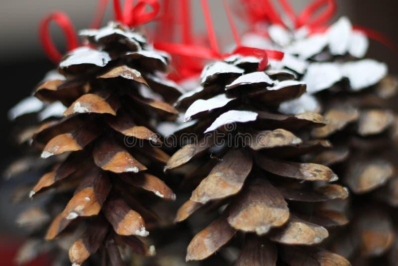 Bożenarodzeniowa sosna konusuje obwieszenie od czerwonych faborków szczęśliwego nowego roku, Doskonalić szczęśliwi nowy rok obraz zdjęcie stock